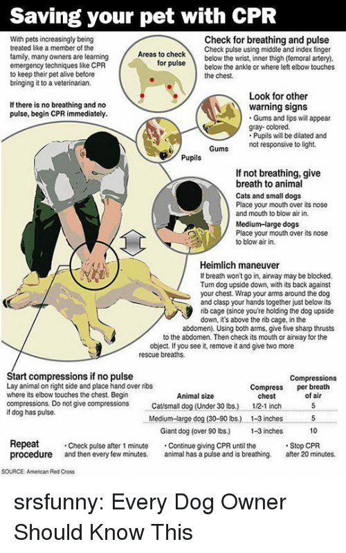 small dogs: Saving your pet with CPR  With pets increasingly being  treated like a member of the  family, many owners are learning  emergency techniques like CPR  to keep their pet alive before  bringing it to a veterinarian.  Check for breathing and pulse  Check pulse using middle and index finger  as to checkbelow the wrist, inner thigh (temoral artery)  ruse below the ankle or where left elbow touches  for  the chest.  Look for other  If there is no breathing and no  pulse, begin CPR immediately.  warning signs  Gums and lips will appear  gray- colored.  Pupils will be dilated and  not responsive to light.  Pupils  If not breathing, give  breath to animal  Cats and small dogs  Place your mouth over its nose  and mouth to blow air in.  Medium-large dogs  Place your mouth over its nose  to blow air in.  Heimlich maneuver  If breath won't go in, airway may be blocked.  Tun dog upside down, with its back against  your chest. Wrap your arms around the dog  and clasp your hands together just below its  rib cage (since you're holding the dog upside  down, it's above the rib cage, in the  abdomen). Using both arms, give five sharp thrusts  to the abdomen. Then check its mouth or airway for the  object. If you see it, remove it and give two more  rescue breaths.  Start compressions if no pulse  Lay animal on right side and place hand over ribs  where its elbow touches the chest. Begin  compressions. Do not give compressions tsmall dog (Under 30 lbs.)  if dog has pulse.  Compressions  Compress per breath  Animal size  chest  12-1 inch  of air  Medium-arge dog (30-90 lbs.) . 1-3 inches5  10  Giant dog (over 90 lbs) -3 inches  Repeat  procedure and then every few minutes. al has a pulse and is breathing. after 20 minutes.  Check pulse after 1 minute Continue giving CPR until the  Stop CPR  SOURCE: American Red Cross srsfunny:  Every Dog Owner Should Know This