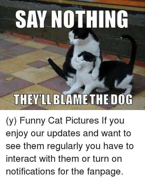 Memes, Pictures, and 🤖: SAY NOTHING  THEY LL  DOG (y) Funny Cat Pictures If you enjoy our updates and want to see them regularly you have to interact with them or turn on notifications for the fanpage.