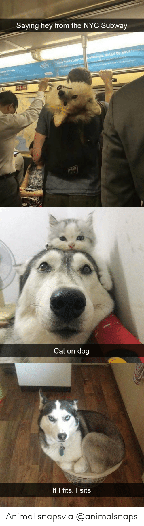 Subway, Target, and Tumblr: Saying hey from the NYC Subway  Rated by your  Now York's best   Cat on dog   If I fits, I sits Animal snapsvia @animalsnaps