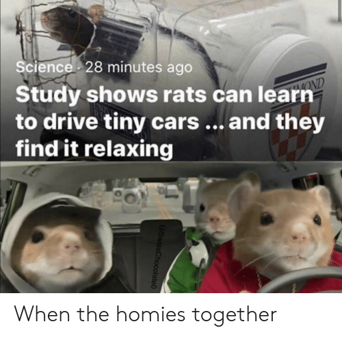 Find It: Science 28 minutes ago  Study shows rats can learn  to drive tiny cars... and they  find it relaxing  OND  U/SwissChocolate0 When the homies together
