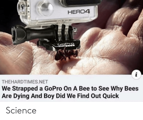 Science: Science