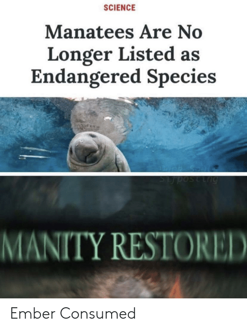 Science, Species, and Lng: SCIENCE  Manatees Are No  Longer Listed as  Endangered Species  Lng  MANITY RESTORED Ember Consumed
