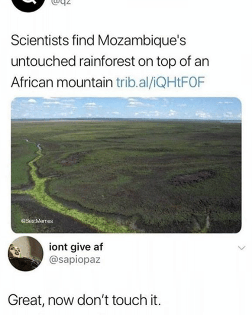 Af, Humans of Tumblr, and Top: Scientists find Mozambique's  untouched rainforest on top of an  African mountain trib.al/iQHtFOF  @BestMemes  iont give af  @sapiopaz  Great, now don't touch it.