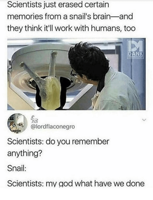 God, Work, and Brain: Scientists just erased certain  memories from a snail's brain-and  they think it'll work with humans, too  DA  โด  @lordflaconegro  Scientists: do you remember  anything?  Snail:  Scientists: my god what have we done