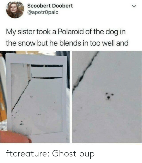 Target, Tumblr, and Blog: Scoobert Doobert  @apotrOpaic  My sister took a Polaroid of the dog in  the snow but he blends in too well and ftcreature:  Ghost pup