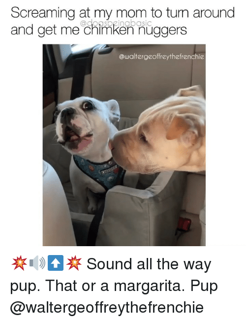 Memes, Mom, and Pup: Screaming at my mom to turn around  and get me chimken nuggers  @doasbeingbasic  @waltergeoffreythefrenchie 💥🔊⬆️💥 Sound all the way pup. That or a margarita. Pup @waltergeoffreythefrenchie