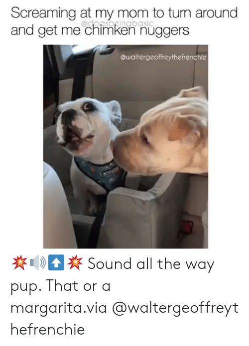Instagram, Target, and Mom: Screaming at my mom to turn around  and get me chimken nüggers  @doasbgingbasic  @waltergeoffreythefrenchie 💥🔊⬆️💥 Sound all the way pup. That or a margarita.via@waltergeoffreythefrenchie