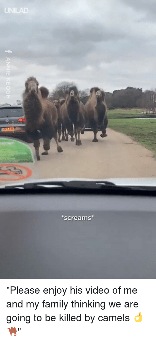 """Dank, Family, and Video: screams """"Please enjoy his video of me and my family thinking we are going to be killed by camels 👌🐫"""""""