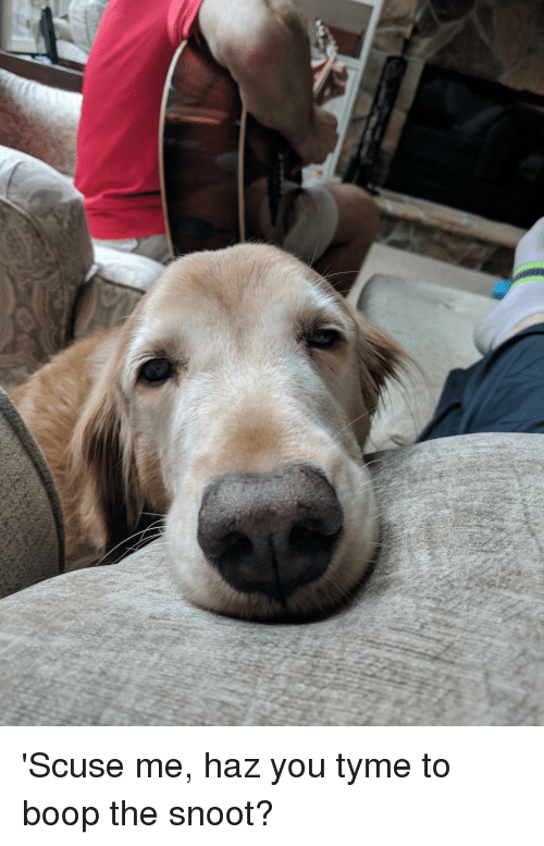 Boop, You, and Snoot: 'Scuse me, haz you tyme to boop the snoot?
