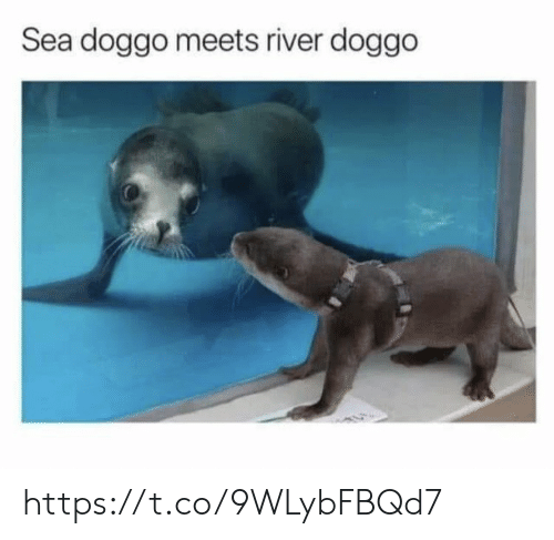 Memes, 🤖, and Doggo: Sea doggo meets river doggo https://t.co/9WLybFBQd7