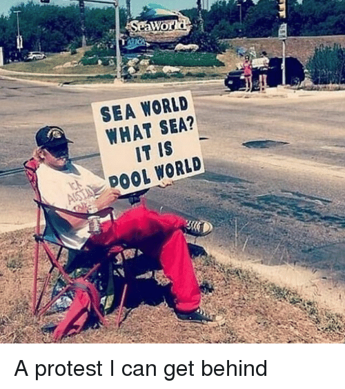 Protest, Sea World, and World: SEA WORLD  WHAT SEA?  IT IS  DOOL WORLD A protest I can get behind