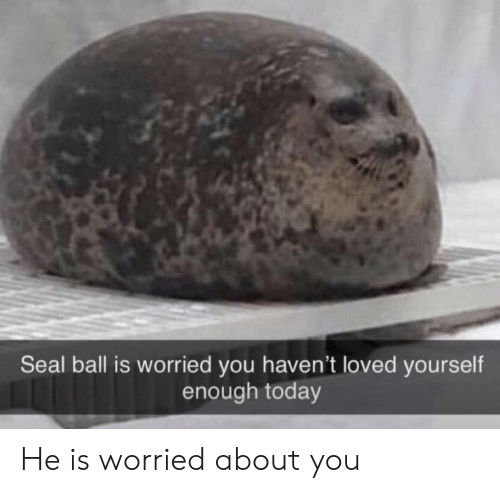 Seal: Seal ball is worried you haven't loved yourself  enough today He is worried about you