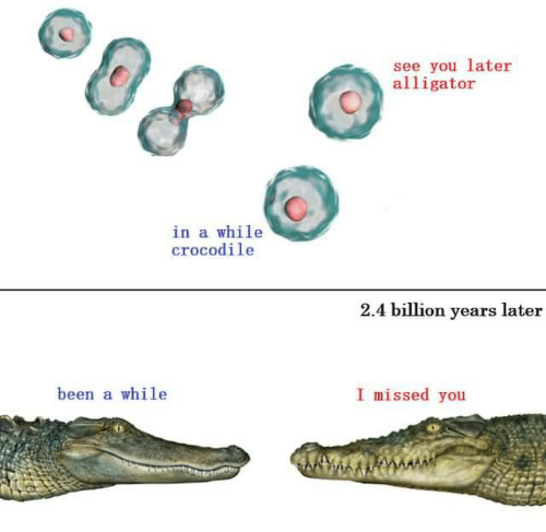 Alligator: see you later  alligator  in a while  crocodile  2.4 billion years later  I missed you  been a while