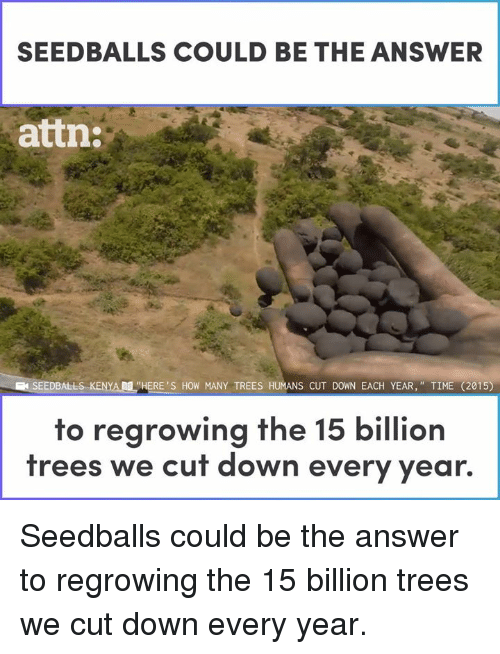 """Memes, Time, and Trees: SEEDBALLS COULD BE THE ANSWER  attn:  SEEDBALLS..KENYAM """"HERE'S HOW MANY TREES HUMANS CUT DOWN EACH YEAR,"""" TIME (2015)  to regrowing the 15 billion  trees we cut down every year. Seedballs could be the answer to regrowing the 15 billion trees we cut down every year."""