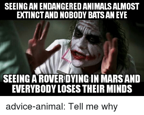 Advice, Tumblr, and Animal: SEEING AN ENDANGERED ANIMALSALMOST  EXTINCT AND NOBODY BATS AN EYE  SEEING AROVERIDYINGIN MARS AND  EVERYBODY LOSES THEIR MINDS advice-animal:  Tell me why