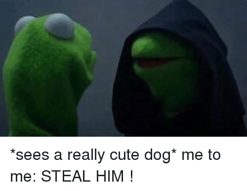 cute dogs: *sees a really cute dog* me to me: STEAL HIM !