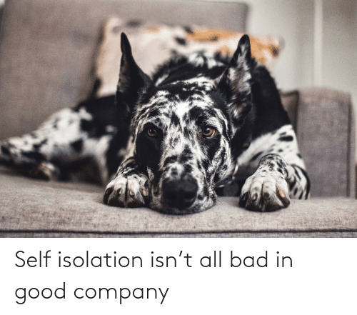 Aww Memes: Self isolation isn't all bad in good company