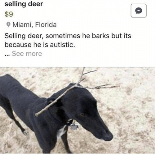 Deer, Florida, and Miami: selling deer  $9  9 Miami, Florida  Selling deer, sometimes he barks but its  because he is autistic.  See more