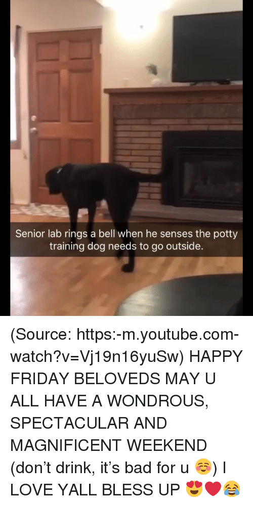 Bad, Bless Up, and Friday: Senior lab rings a bell when he senses the potty  training dog needs to go outside. (Source: https:-m.youtube.com-watch?v=Vj19n16yuSw) HAPPY FRIDAY BELOVEDS MAY U ALL HAVE A WONDROUS, SPECTACULAR AND MAGNIFICENT WEEKEND (don't drink, it's bad for u ☺️) I LOVE YALL BLESS UP 😍❤️😂