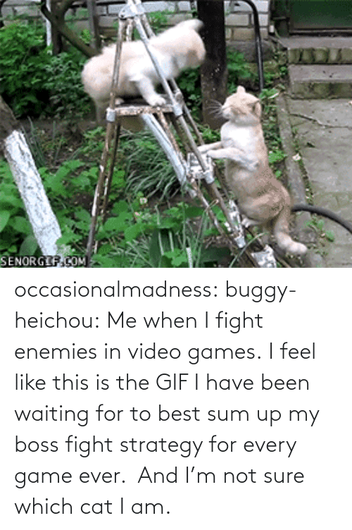 For To: SENORGIF.COM occasionalmadness:  buggy-heichou:  Me when I fight enemies in video games.  I feel like this is the GIF I have been waiting for to best sum up my boss fight strategy for every game ever.  And I'm not sure which cat I am.