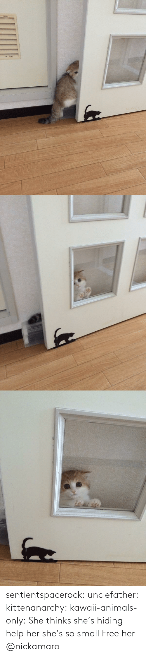 Free Her: sentientspacerock:  unclefather:  kittenanarchy:  kawaii-animals-only:  She thinks she's hiding  help her she's so small   Free her   @nickamaro