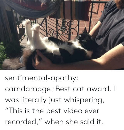 "Tumblr, Apathy, and Best: sentimental-apathy: camdamage: Best cat award.  I was literally just whispering, ""This is the best video ever recorded,"" when she said it."