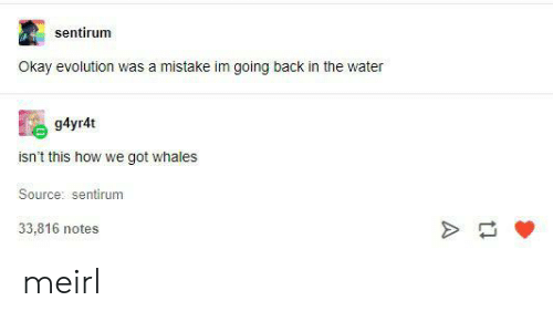 Evolution, Okay, and Water: sentirum  Okay evolution was a mistake im going back in the water  g4yr4t  isn't this how we got whales  Source: sentirum  33,816 notes  tl meirl