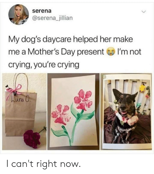 Mother's Day: serena  @serena_jillian  My dog's daycare helped her make  me a Mother's Day presentI'm not  crying, you're crying I can't right now.