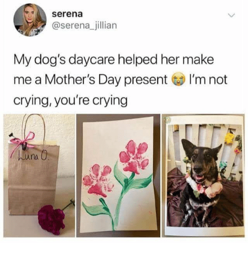 Mother's Day: serena  @serena_jillian  My dog's daycare helped her make  me a Mother's Day present I'm not  crying, you're crying  huna O