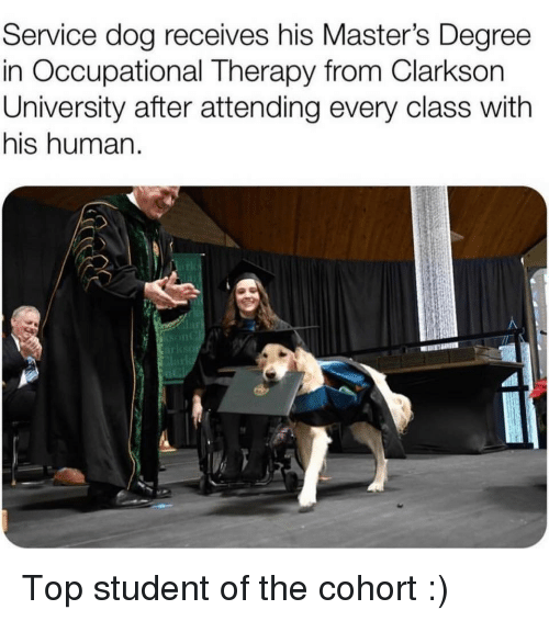 lar: Service dog receives his Master's Degree  in Occupational Therapy from Clarkson  University after attending every class with  his human.  lar Top student of the cohort :)