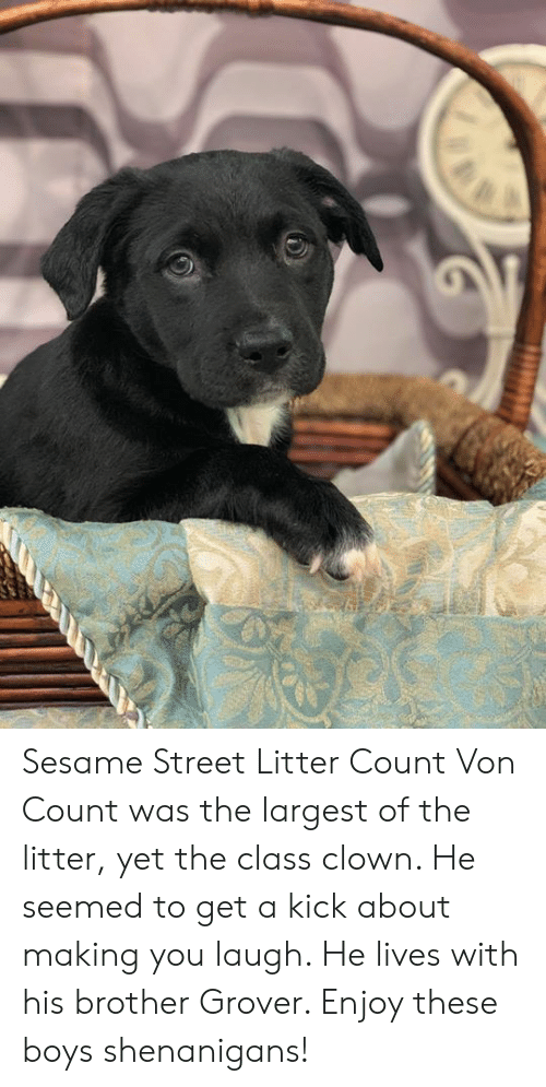 Sesame Street Litter Count Von Count Was The Largest Of The