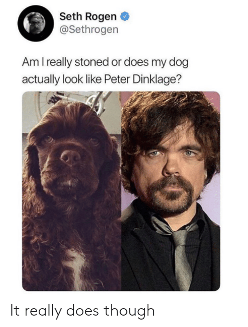 peter: Seth Rogen  @Sethrogen  Am I really stoned or does my dog  actually look like Peter Dinklage? It really does though