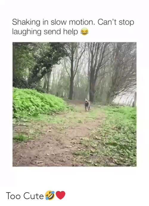 Cute, Slow Motion, and Help: Shaking in slow motion. Can't stop  laughing send help Too Cute🤣❤️