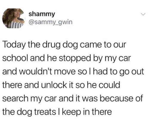 School, Search, and Today: shammy  @sammy_gwin  Today the drug dog came to our  school and he stopped by my car  and wouldn't move so I had to go out  there and unlock it so he could  search my car and it was because of  the dog treats l keep in there