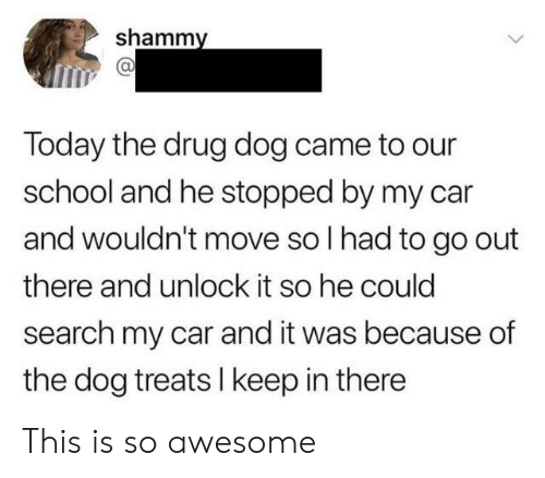 School, Search, and Today: shammy  Today the drug dog came to our  school and he stopped by my car  and wouldn't move so I had to go out  there and unlock it so he could  search my car and it was because of  the dog treats I keep in there This is so awesome