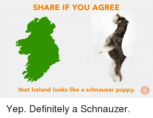 Dank, Definitely, and Ireland: SHARE IF YOU AGREE  that Ireland looks like a schnauzer puppy. Yep. Definitely a Schnauzer.