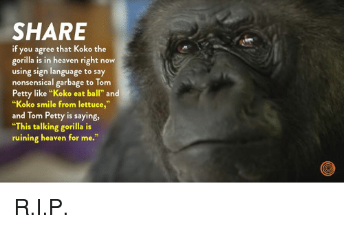 "nonsensical: SHARE  if you agree that Koko the  gorilla is in heaven right now  using sign language to say  nonsensical garbage to Tom  Petty like ""Koko eat ball"" and  ""Koko smile from lettuce,""  and Tom Petty is saying,  ""This talking gorilla is  ruining heaven for me."" R.I.P."