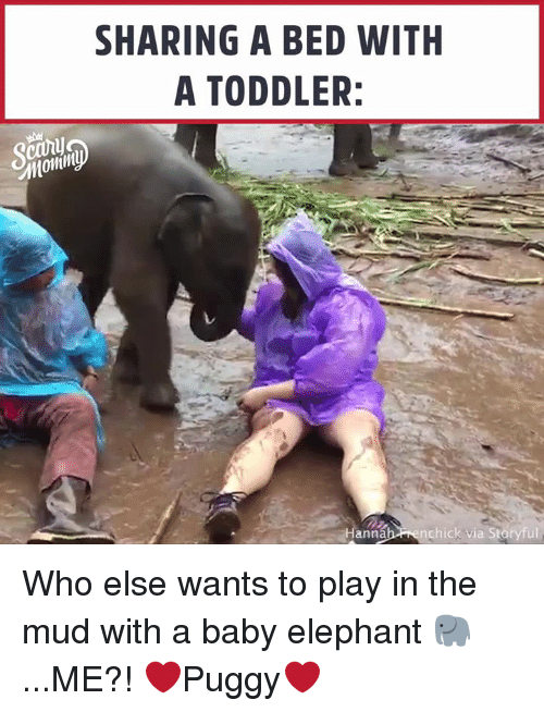 mud: SHARING A BED WITH  A TODDLER:  ann  nchick via Storyful Who else wants to play in the mud with a baby elephant 🐘 ...ME?! ❤️Puggy❤️