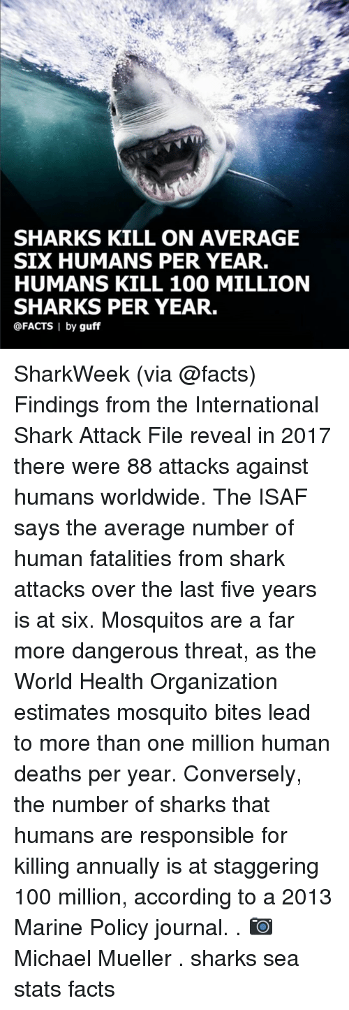 mosquito bites: SHARKS KILL ON AVERAGE  SIX HUMANS PER YEAR.  HUMANS KILL 100 MILLION  SHARKS PER YEAR.  @FACTS I by guff SharkWeek (via @facts) Findings from the International Shark Attack File reveal in 2017 there were 88 attacks against humans worldwide. The ISAF says the average number of human fatalities from shark attacks over the last five years is at six. Mosquitos are a far more dangerous threat, as the World Health Organization estimates mosquito bites lead to more than one million human deaths per year. Conversely, the number of sharks that humans are responsible for killing annually is at staggering 100 million, according to a 2013 Marine Policy journal. . 📷 Michael Mueller . sharks sea stats facts