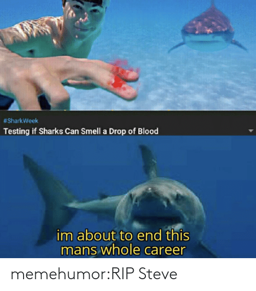 blood:  #SharkWeek  Testing if Sharks Can Smell a Drop of Blood  im about to end this  mans whole career memehumor:RIP Steve