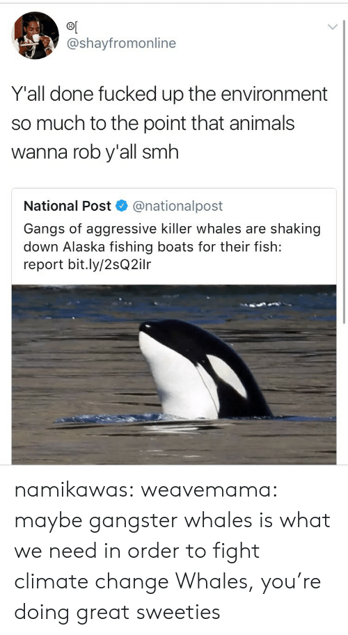 Alaska: @shayfromonline  Y'all done fucked up the environment  so much to the point that animals  wanna rob y'all smh  National Post  @nationalpost  Gangs of aggressive killer whales are shaking  down Alaska fishing boats for their fish:  report bit.ly/2sQ2ilr namikawas:  weavemama:  maybe gangster whales is what we need in order to fight climate change  Whales, you're doing great sweeties