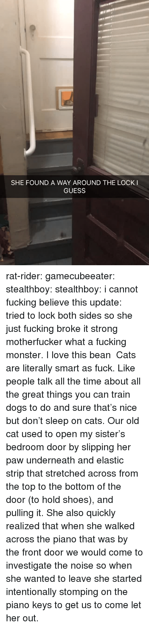 Cats, Dogs, and Fucking: SHE FOUND A WAY AROUND THE LOCK I  GUESS rat-rider: gamecubeeater:  stealthboy:  stealthboy: i cannot fucking believe this update: tried to lock both sides so she just fucking broke it   strong motherfucker  what a fucking monster. I love this bean   Cats are literally smart as fuck. Like people talk all the time about all the great things you can train dogs to do and sure that's nice but don't sleep on cats. Our old cat used to open my sister's bedroom door by slipping her paw underneath and elastic strip that stretched across from the top to the bottom of the door (to hold shoes), and pulling it. She also quickly realized that when she walked across the piano that was by the front door we would come to investigate the noise so when she wanted to leave she started intentionally stomping on the piano keys to get us to come let her out.