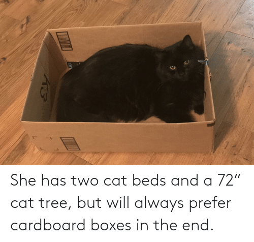 """in the end: She has two cat beds and a 72"""" cat tree, but will always prefer cardboard boxes in the end."""