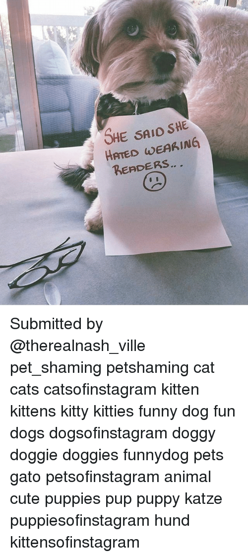 Cats, Cute, and Dogs: SHE SAIO SHE  HATED WEAKING  RERDERS Submitted by @therealnash_ville pet_shaming petshaming cat cats catsofinstagram kitten kittens kitty kitties funny dog fun dogs dogsofinstagram doggy doggie doggies funnydog pets gato petsofinstagram animal cute puppies pup puppy katze puppiesofinstagram hund kittensofinstagram