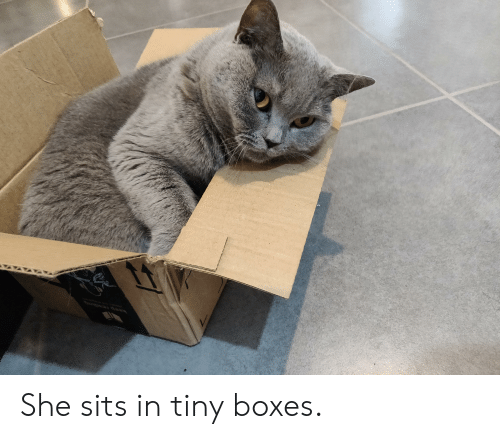 Tiny, She, and Sits: She sits in tiny boxes.