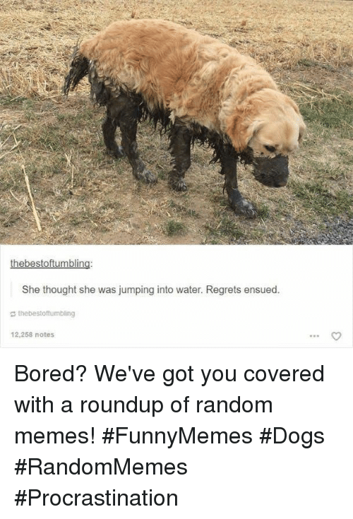 Bored, Dogs, and Memes: She thought she was jumping into water. Regrets ensued.  g thebestoftumbling  12,258 notes Bored? We've got you covered with a roundup of random memes! #FunnyMemes #Dogs #RandomMemes #Procrastination
