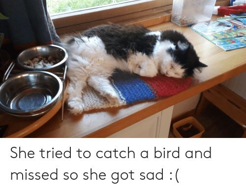 Sad, Got, and She: She tried to catch a bird and missed so she got sad :(