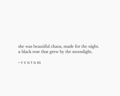 black rose: she was beautiful chaos, made for the night.  a black rose that grew by the moonlight.  - ve ntum