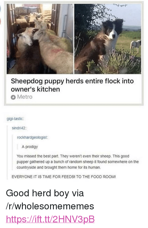 """Food, Best, and Good: Sheepdog puppy herds entire flock into  owner's kitchen  Metro  gigi-tastic:  sindri42:  rockhardgeologist:  A prodigy  You missed the best part. They weren't even their sheep. This good  pupper gathered up a bunch of random sheep it found somewhere on the  countryside and brought them home for its human  EVERYONE IT IS TIME FOR FEEDS! TO THE FOOD ROOM! <p>Good herd boy via /r/wholesomememes <a href=""""https://ift.tt/2HNV3pB"""">https://ift.tt/2HNV3pB</a></p>"""