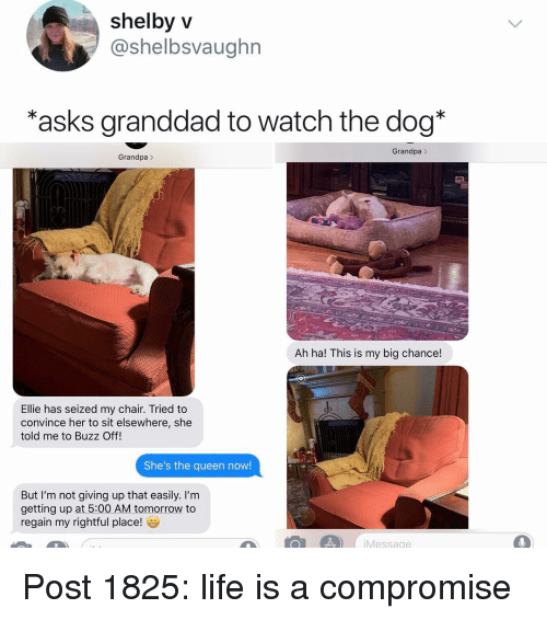 Life, Memes, and Queen: shelby v  @shelbsvaughn  *asks granddad to watch the dog*  Grandpa  Grandpa>  Ah ha! This is my big chance!  Ellie has seized my chair. Tried to  convince her to sit elsewhere, she  told me to Buzz Off!  She's the queen now!  But I'm not giving up that easily. I'm  getting up at 5:00 AM tomorrow to  regain my rightful place!  Message Post 1825: life is a compromise